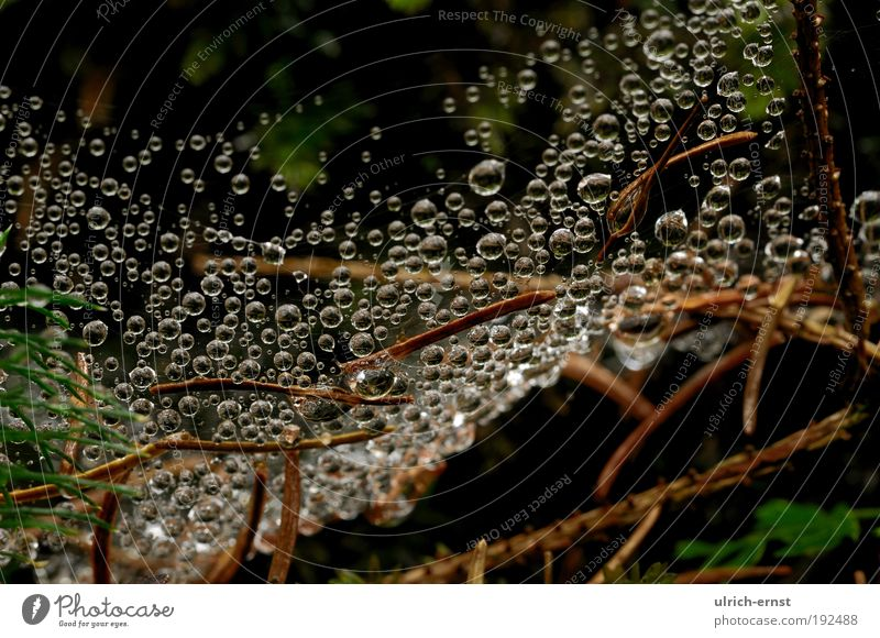 macro world Nature Drops of water Weather Moss Wood Water Net Natural Relaxation Calm Woodground Fir needle Spider's web Colour photo Subdued colour