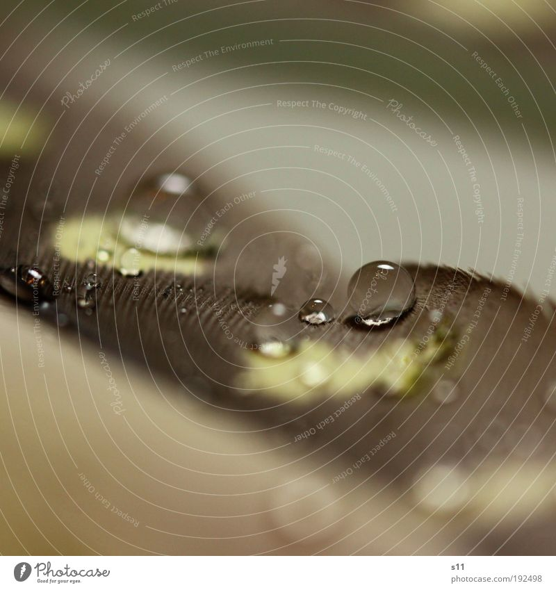 Beautiful Water Yellow Small Gray Glittering Fresh Elegant Power Gloomy Esthetic Feather Drops of water Wet Soft Round