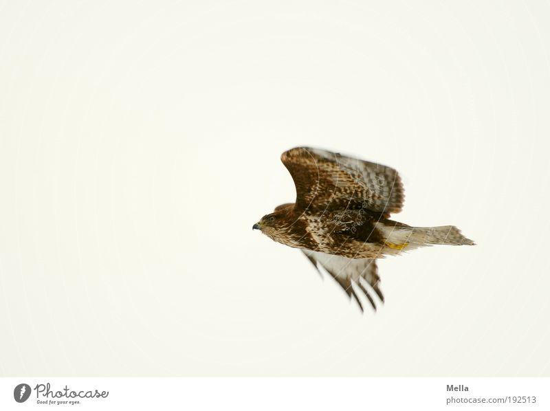 Nature Sky Animal Life Movement Freedom Air Bright Power Bird Environment Flying Natural Wild animal Effort