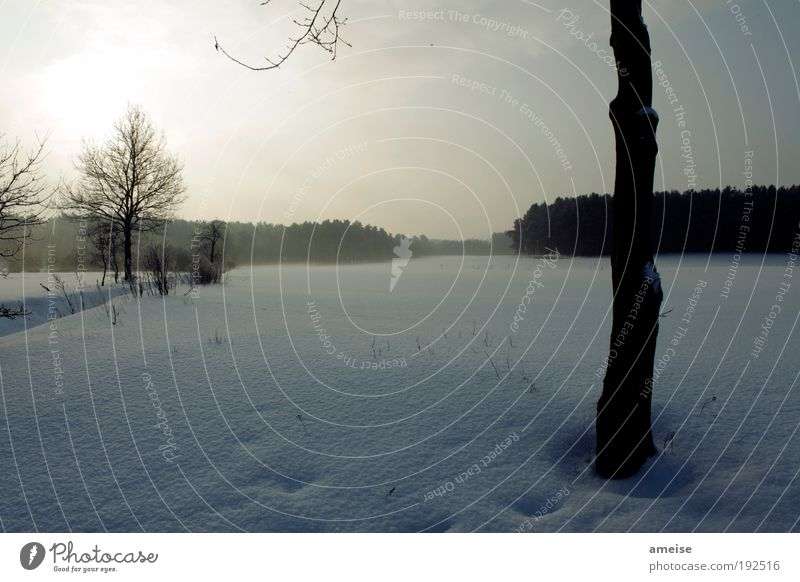 Blue White Tree Calm Winter Forest Snow Landscape Field Safety (feeling of)