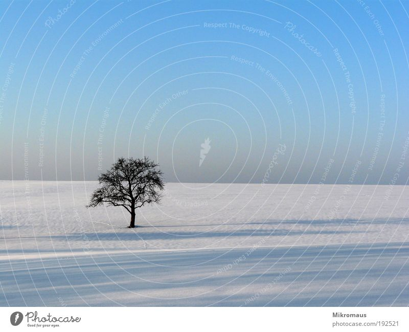 lonely tree Vacation & Travel Far-off places Winter Winter vacation Nature Landscape Plant Cloudless sky Climate Climate change Beautiful weather Snow Tree