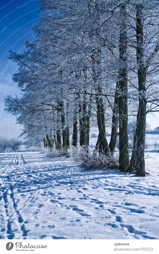 Nature Beautiful Tree Winter Calm Loneliness Far-off places Life Cold Snow Freedom Dream Lanes & trails Landscape Air Ice