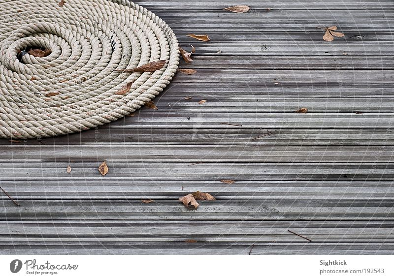 The rope Autumn Leaf Terrace Garden Snail Rope Wood Knot Lie Tug-of-war Round Brown Gray Moody Calm coiled Coil Colour photo Exterior shot Detail Pattern