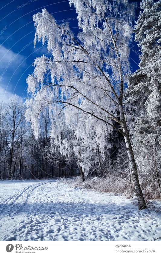 Nature Sky Tree Winter Calm Loneliness Far-off places Forest Life Snow Relaxation Meadow Freedom Dream Landscape Ice