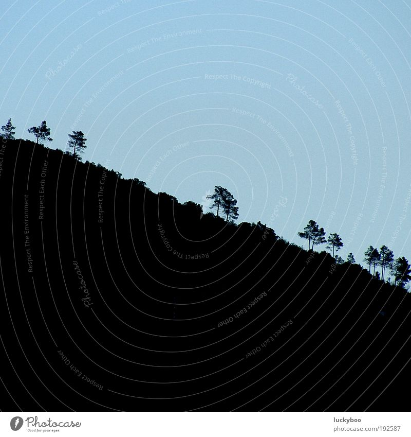 Nature Sky Tree Blue Plant Calm Black Loneliness Above Mountain Landscape Field Environment Earth Growth Gloomy