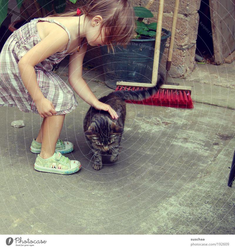 Child Hand Girl Animal Cat Infancy Dress Idyll Pelt Touch Friendliness Footwear Joie de vivre (Vitality) Sneakers Pet Safety (feeling of)