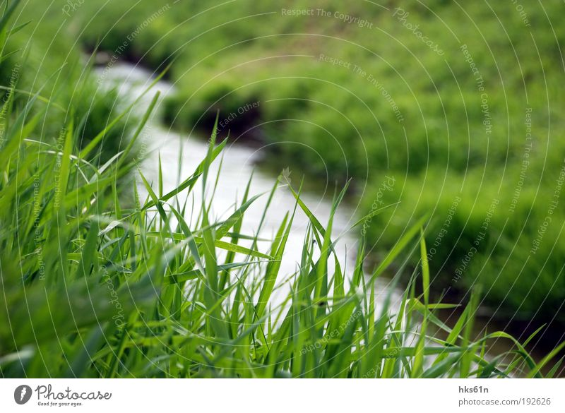 grass whispering Plant Water Summer Grass Meadow River bank Deserted Calm Authentic Relaxation Banks of a brook Brook Green Green space Colour photo