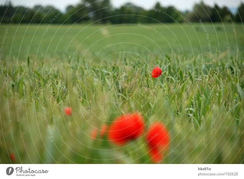 Nature Green Beautiful Summer Relaxation Red Calm Life Freedom Contentment Field Trip Well-being Fragrance Harmonious Summer vacation
