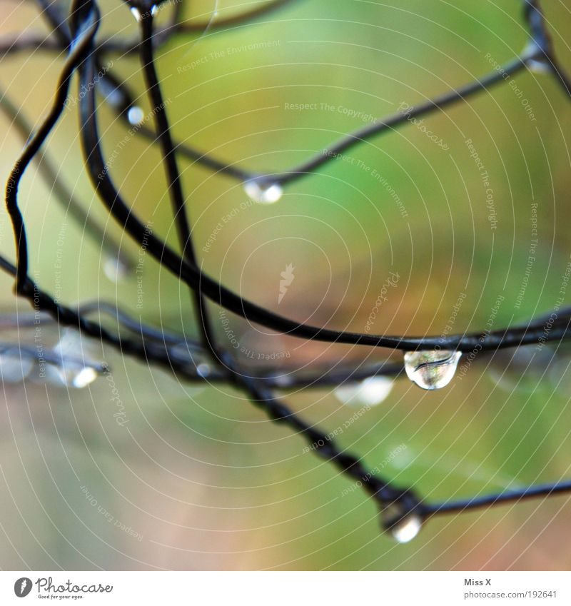 trickle Nature Water Drops of water Climate Weather Bad weather Storm Rain Park Fresh Cold Wet Garden fence Fence Wire Wire netting Colour photo Multicoloured