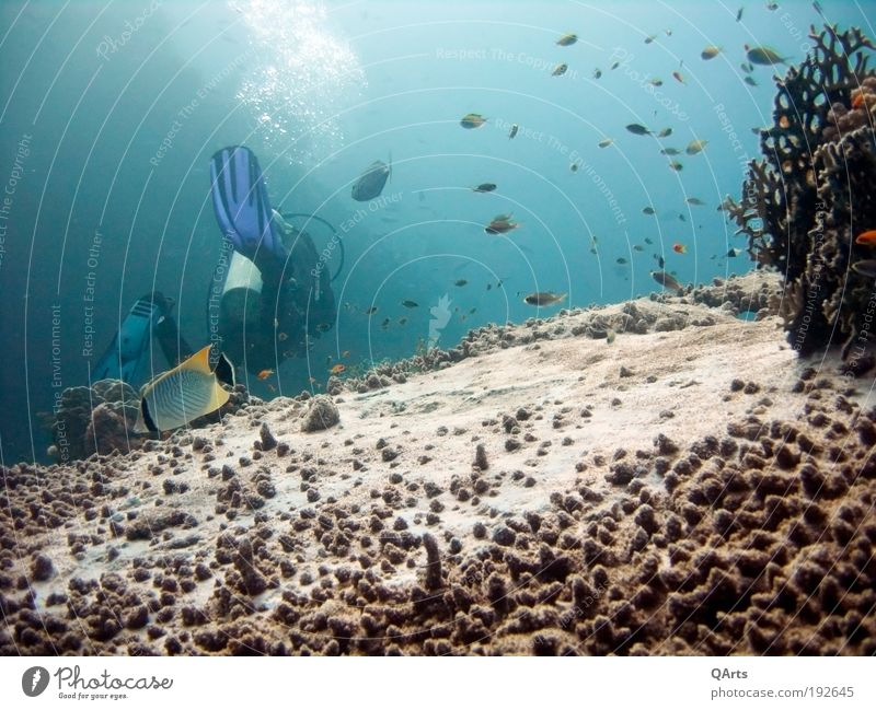 Nature Water Ocean Vacation & Travel Calm Relaxation Freedom Fish Adventure Dive Underwater photo Structures and shapes Animal Coral reef