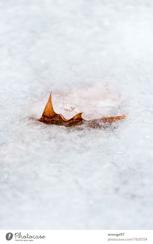Nature Plant White Leaf Calm Winter Cold Natural Lake Brown Ice Fresh Wet Frost Claustrophobia Dry