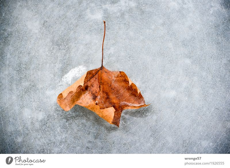 Great climate | Ice age Nature Plant Winter Frost Leaf Pond Old Cold Brown Gray White Autumn leaves Autumnal colours Central perspective Landscape format