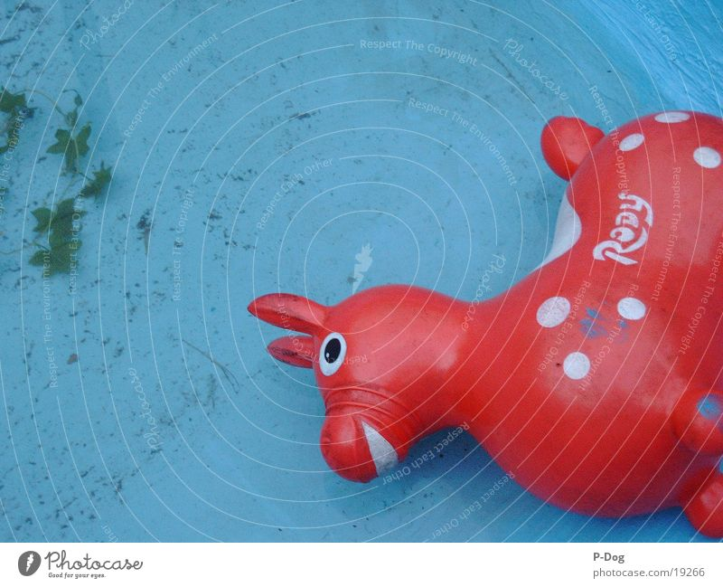 Water Things Toys Rubber toy animal