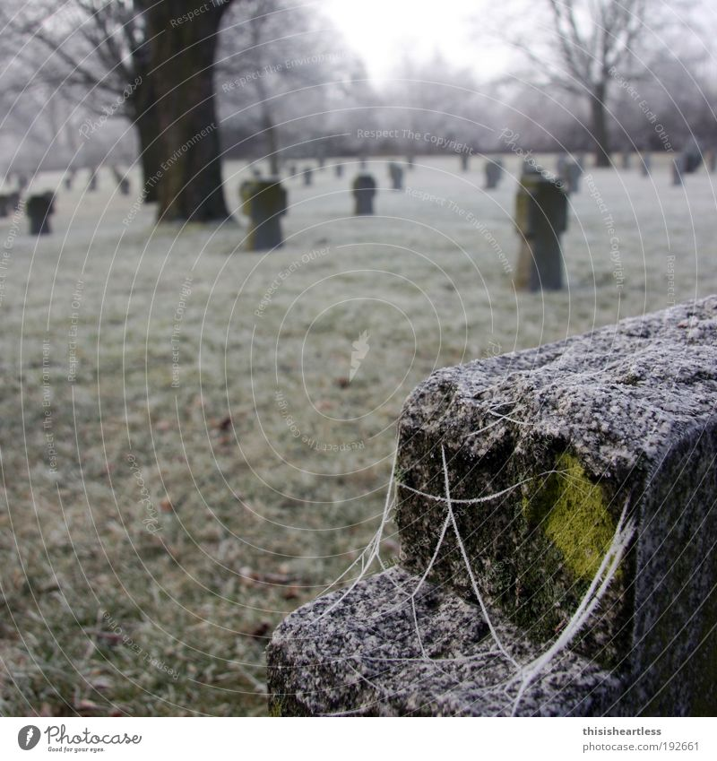Human being Old Winter Meadow Death Grass Stone Sadness Dream Park Ice Fog Europe Frost Grief Touch