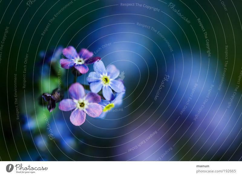 Nature Plant Blue Flower Leaf Sadness Blossom Spring Happy Friendship Design Fresh Happiness Joie de vivre (Vitality) Romance Friendliness