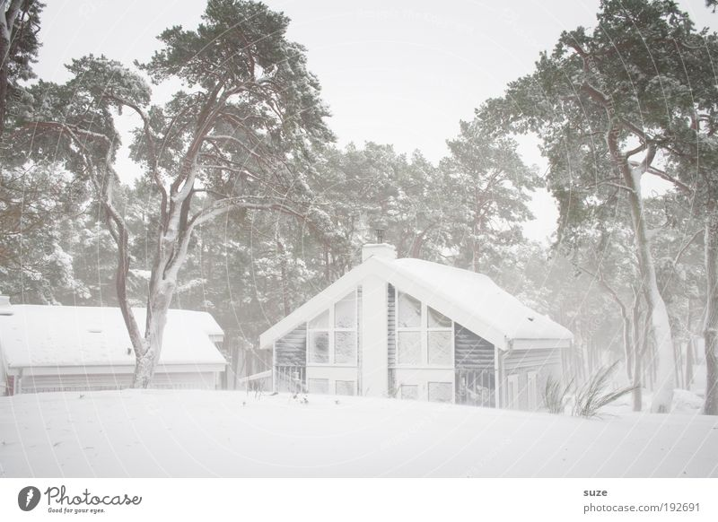 Sky Nature Vacation & Travel White Tree Loneliness Winter House (Residential Structure) Environment Cold Snow Bright Ice Wind Living or residing Frost