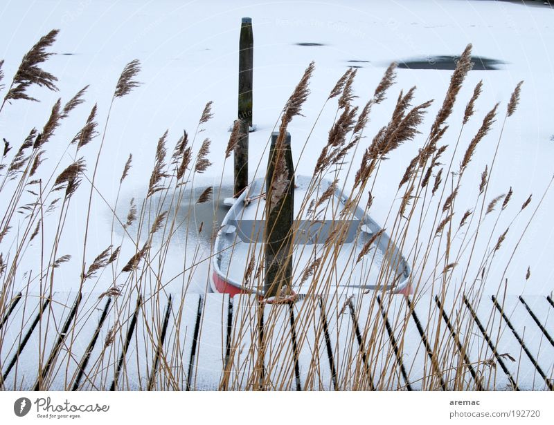 Nature Water Plant Winter Vacation & Travel Calm Snow Grass Landscape Ice Moody Frost River Harbour Jetty Rowboat