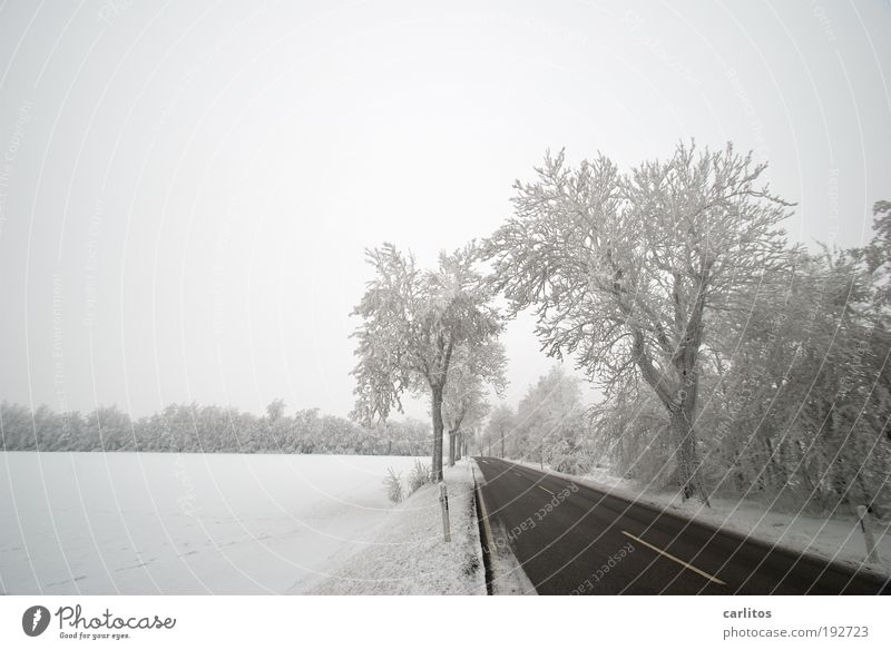 Lower Saxon Siberia II Landscape Freeze Winter Ice Frost Tree Traffic infrastructure Motoring Traffic accident Street Esthetic Cold Black White Spring fever