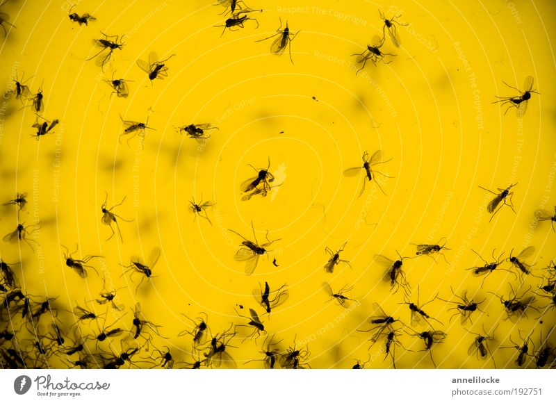 Nature Animal House (Residential Structure) Yellow Environment Flying Wild animal Climate Fly Living or residing Insect Catch Bizarre Disgust Crawl Flowerpot