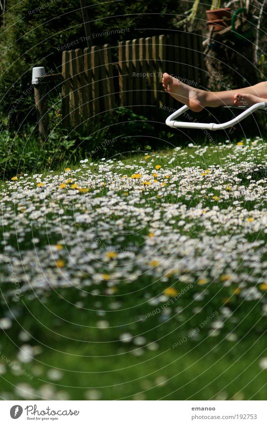 Human being Nature Beautiful Plant Sun Summer Flower Joy Calm Relaxation Meadow Landscape Freedom Grass Garden Spring