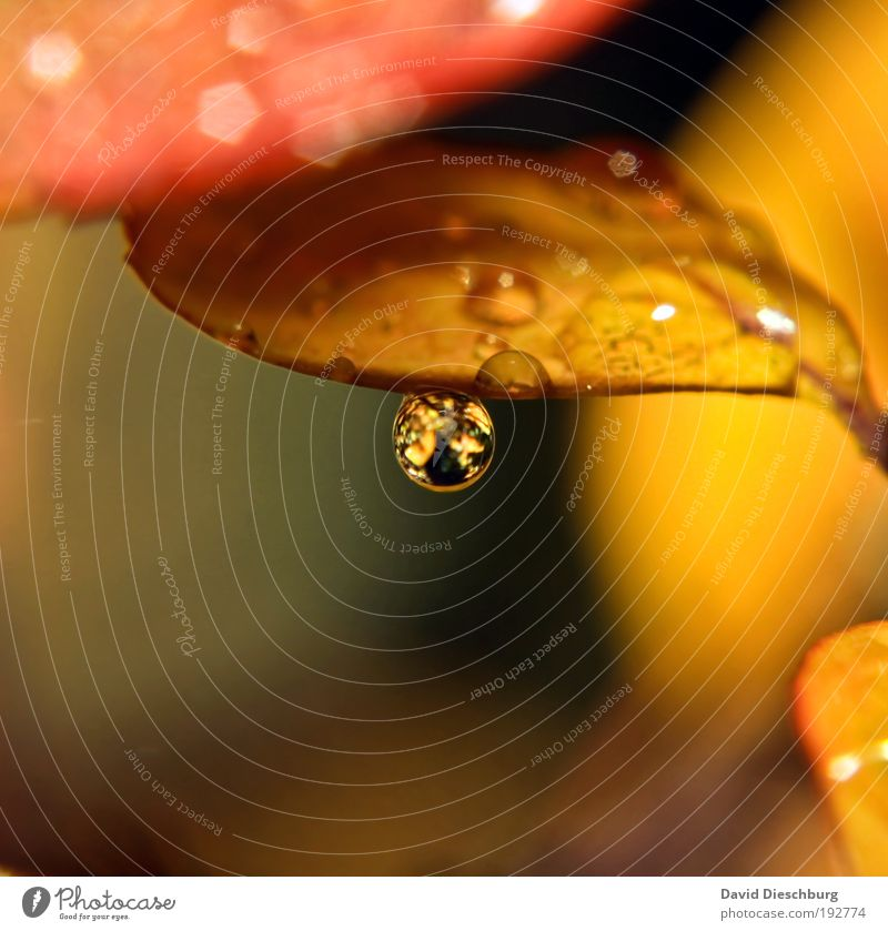 Nature Plant Leaf Yellow Life Autumn Brown Rain Glittering Gold Drops of water Wet Drop Harmonious Still Life Autumn leaves