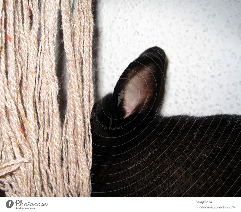 Joy Black Animal Ear Pelt Curiosity Hide Hare & Rabbit & Bunny Pet Scarf Wool Emotions
