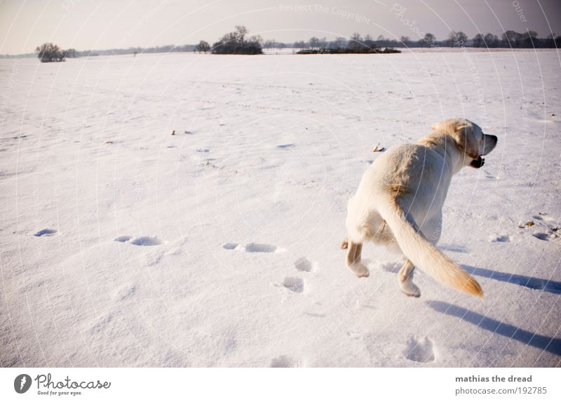 Nature Sky White Sun Winter Animal Cold Snow Meadow Jump Playing Dog Landscape Ice Bright Field