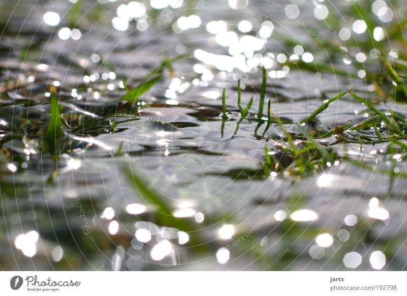 Nature Water Summer Autumn Meadow Grass Spring Park Landscape Contentment Glittering Environment Wet Fresh Climate Natural