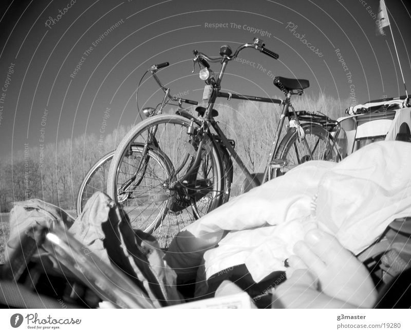 Gazelles in the park Park Poplar Infrared Toes Leisure and hobbies Dutch bicycles Black & white photo bicycle trailers