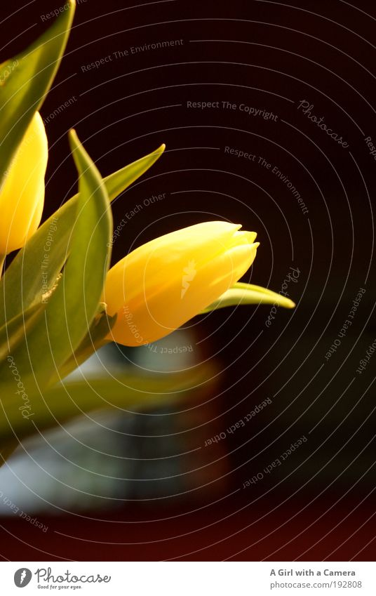 Nature Plant Green Flower Leaf Black Yellow Meadow Natural Happy Moody Art Glittering Park Wild Elegant