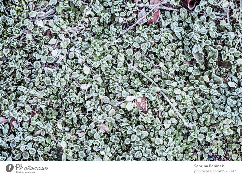 Frost IV Environment Nature Plant Animal Winter Ice Leaf Foliage plant Wild plant Garden Park Meadow Equal Idyll Cold Colour photo Subdued colour Exterior shot