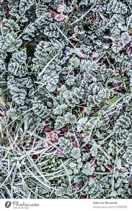 frost II Nature Plant Animal Winter Ice Frost Leaf Foliage plant Wild plant Garden Park Meadow Cold Environment Colour photo Subdued colour Exterior shot
