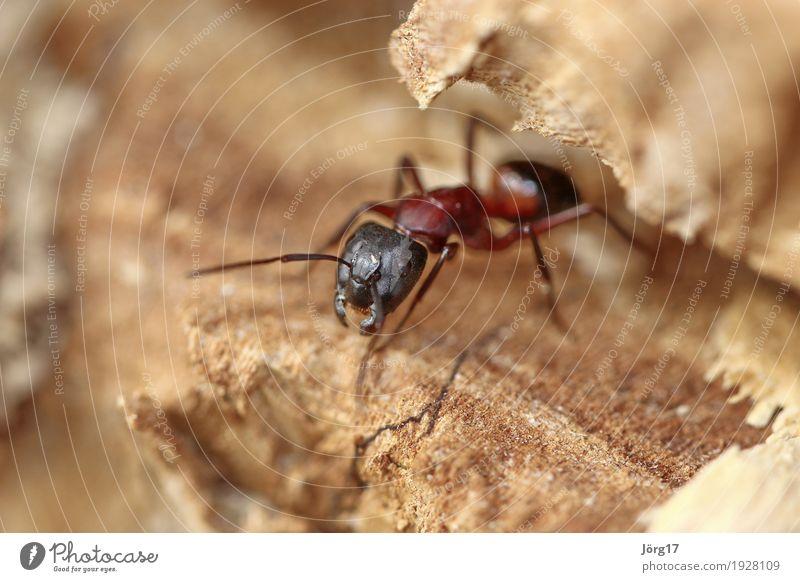 Nature Animal Life Wild animal Ant