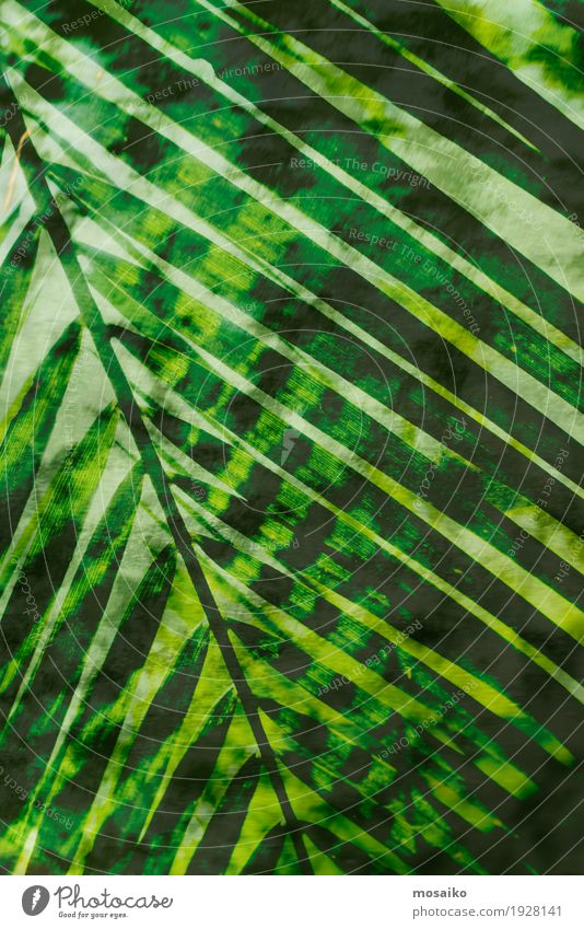Textures of Tropical Plants Life Well-being Senses Meditation Spa Art Work of art Painting and drawing (object) Nature Fern Foliage plant Exotic Forest Esthetic