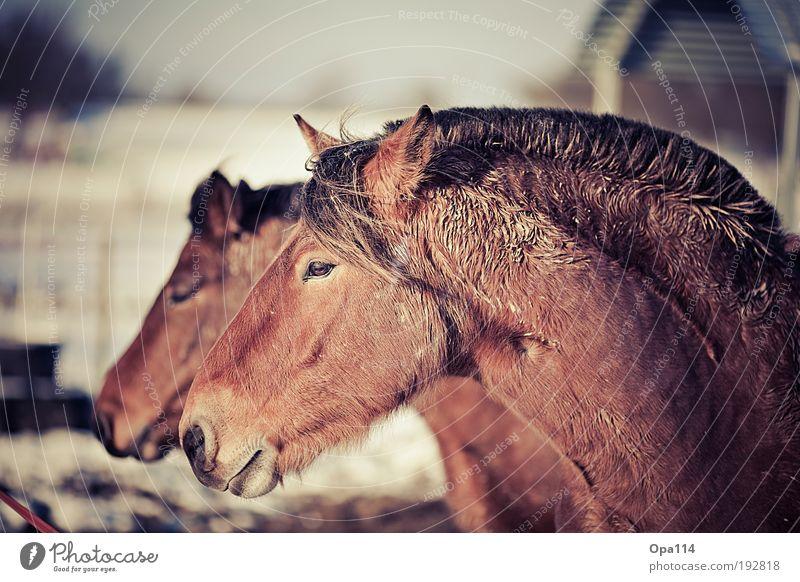 White Animal Black Brown Pair of animals Esthetic Observe Cool (slang) Soft Horse Team Breathe Farm animal Herd Settings