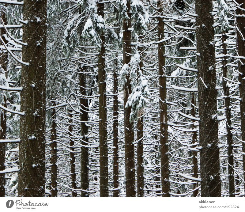 winter forest Environment Nature Landscape Plant Winter Climate Weather Bad weather Ice Frost Snow Tree Forest Mountain Cool (slang) Dark Tall Cold Black White