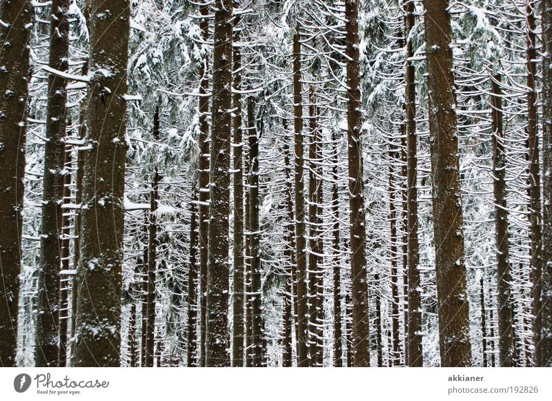 Nature White Tree Plant Winter Black Forest Dark Cold Snow Landscape Ice Weather Environment Cool (slang) Frost