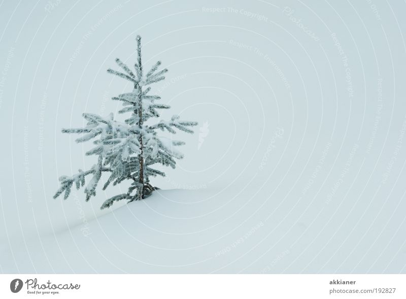Nature White Tree Plant Winter Environment Landscape Cold Snow Small Park Ice Weather Climate Frost Cool (slang)