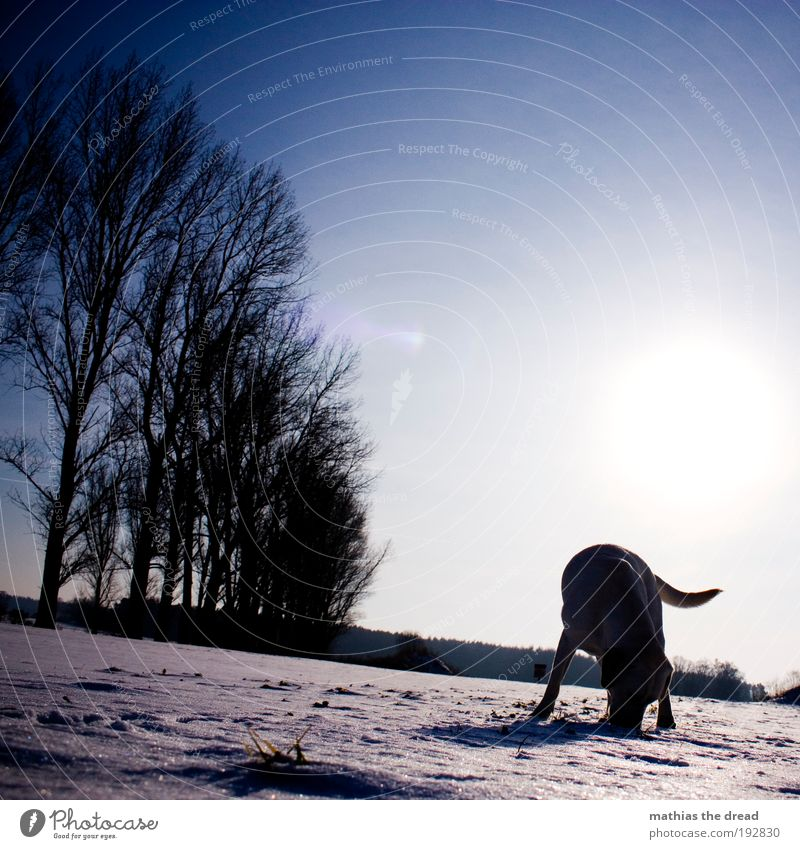 Nature White Sun Plant Winter Animal Cold Snow Meadow Freedom Dog Landscape Ice Bright Field Environment