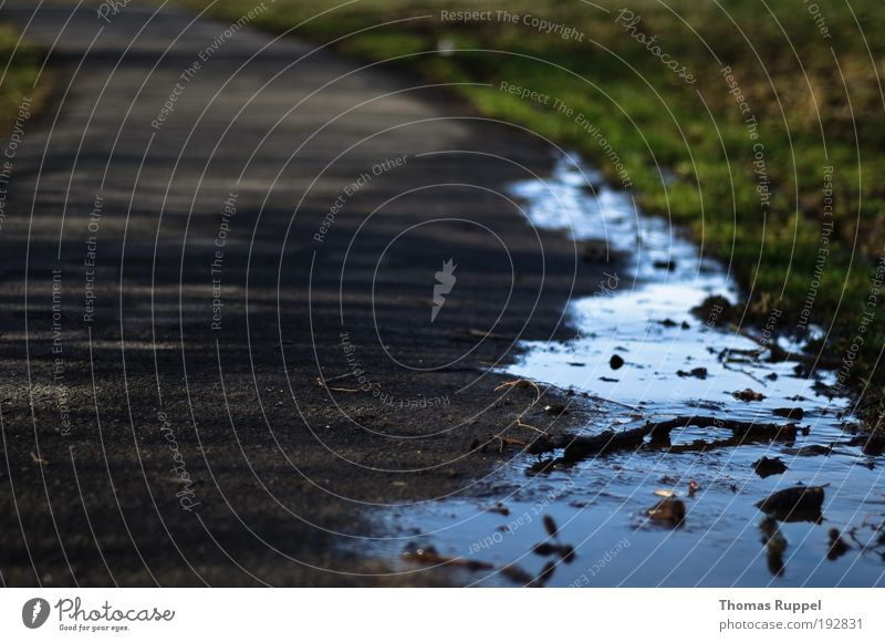 water edge Environment Nature Water Plant wooden stick Meadow Field Puddle Traffic infrastructure Lanes & trails Gray Green Colour photo Exterior shot Deserted