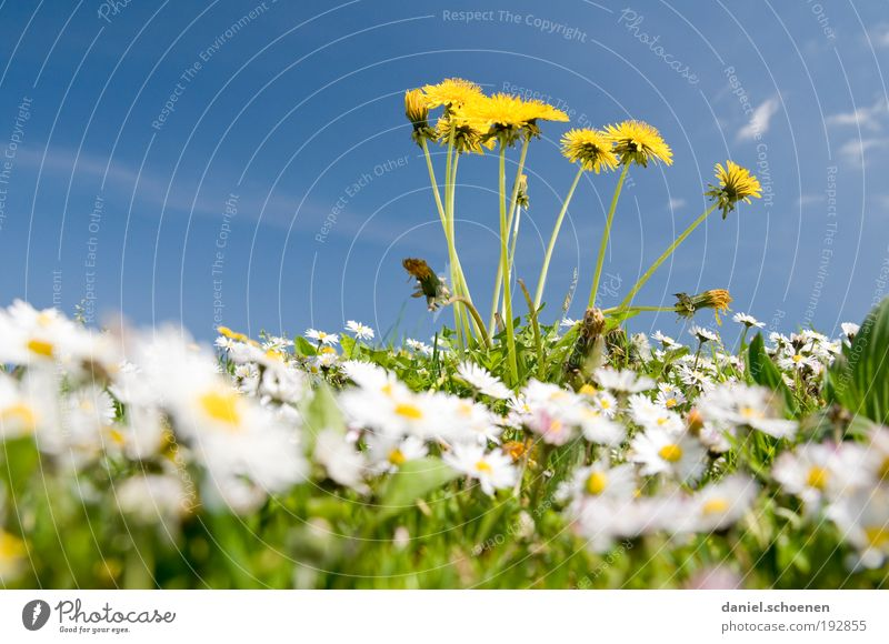 Nature Sky Flower Green Blue Plant Leaf Yellow Colour Meadow Blossom Grass Spring Weather Environment Climate