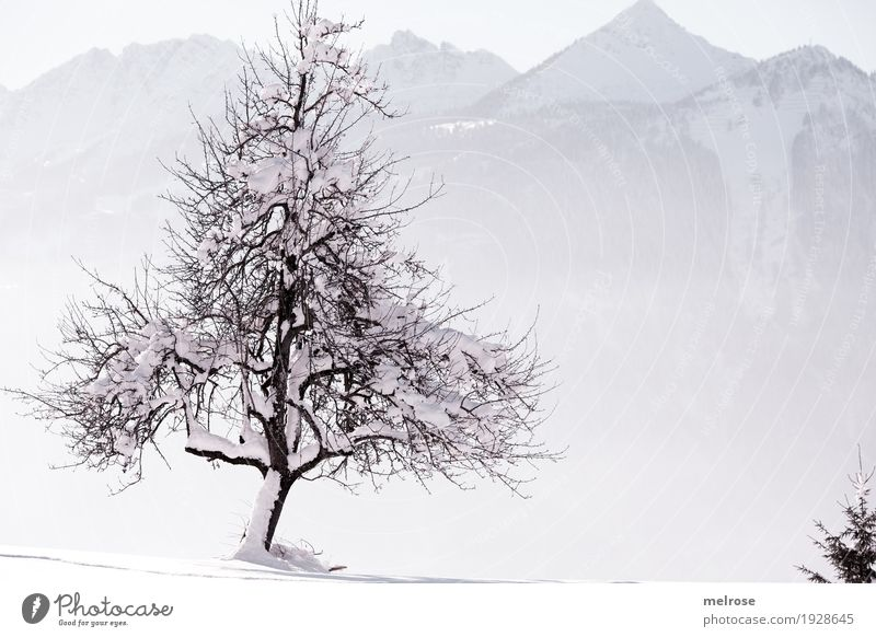 Nature connected Landscape Sky Sunlight Winter Beautiful weather Ice Frost Snow Tree Branch Twigs and branches Mountain Love of nature single tree Snowscape