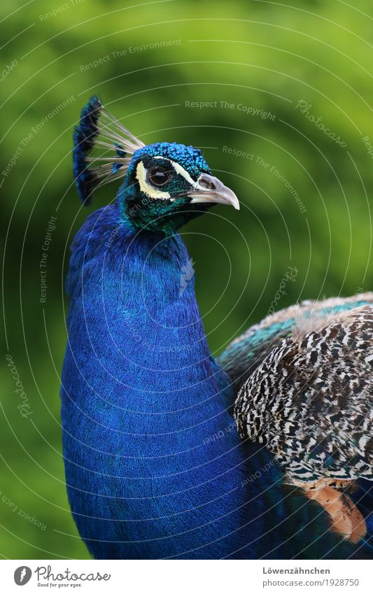 Nature Blue Colour Green Beautiful White Animal Freedom Brown Bird Moody Glittering Elegant Esthetic Authentic Feather