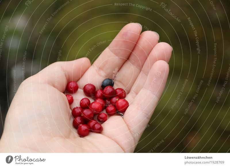 Hunter and Collector... Hand Fingers Cowberry Blueberry Fresh Small Delicious Natural Wild Green Red Patient Authentic Modest Adventure Relaxation Experience