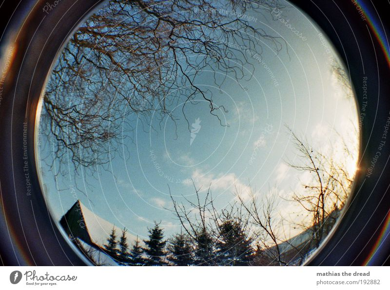 ONE OF THE FEW SUNNY DAYS Environment Nature Landscape Cloudless sky Sunrise Sunset Winter Beautiful weather Ice Frost Snow Plant Tree Bushes Garden