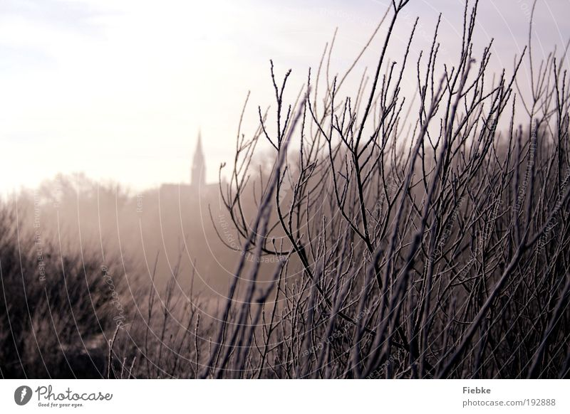 ice age Environment Nature Ice Frost Snow Plant Tree Bushes Village Church Relaxation Cold Wet Gloomy White Calm Loneliness Moody Dream Winter To go for a walk