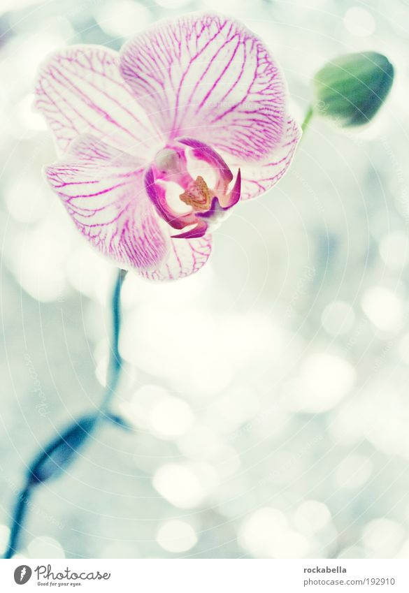 orchid Elegant Wellness Life Harmonious Well-being Contentment Senses Relaxation Calm Fragrance Cure Spa Nature Plant Orchid Esthetic Cold Kitsch Peace Pure