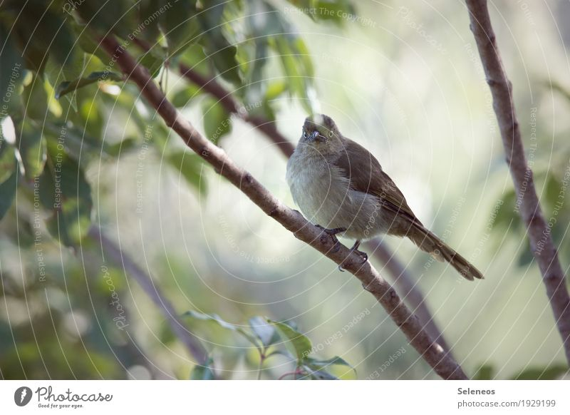 Nature Plant Summer Tree Leaf Animal Forest Environment Small Freedom Bird Wild animal Wing Observe Near Animal face