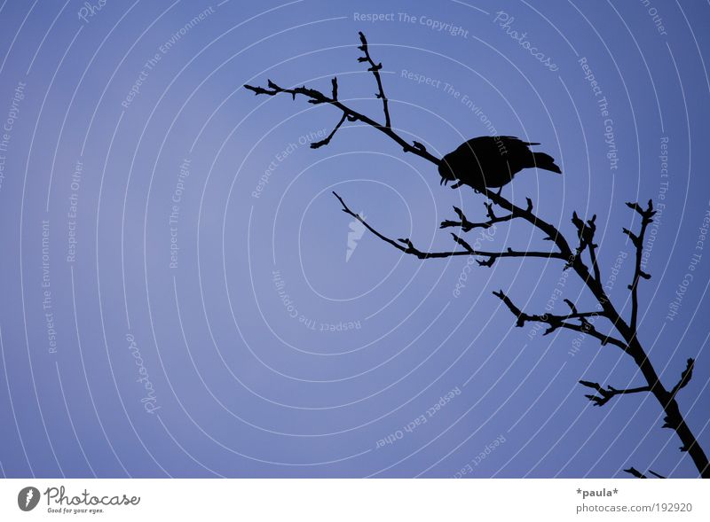 Nature Sky Tree Blue Black Loneliness Animal Dark Autumn Freedom Dream Air Contentment Power Bird