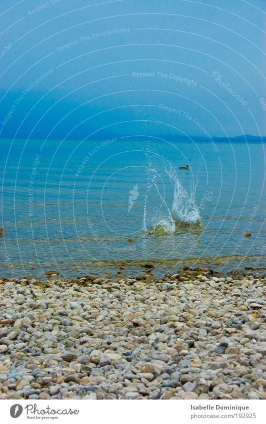 hartes Wasser Nature Water Beautiful Sky Blue Summer Animal Mountain Movement Dream Lake Bird Coast Wait Fog Drops of water